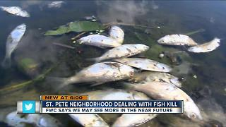 St. Pete neighborhood dealing with fish kill - Video