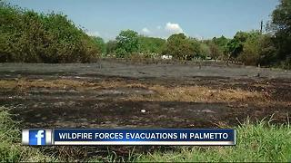 Wildfire forces evacuations in Palmetto - Video