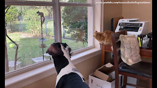 Funny Cat And Great Dane Are Mesmerized By Squirrel Reality TV