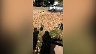 Cute Dogs Play In The Leaves