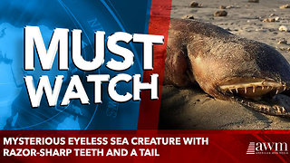 Mysterious eyeless sea creature with razor-sharp teeth and a tail - Video