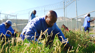 The solution to prison reform could be hiding in a garden