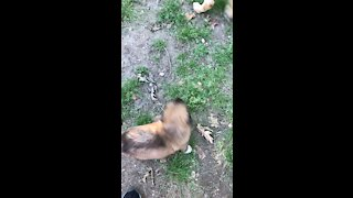 Pups playing outside