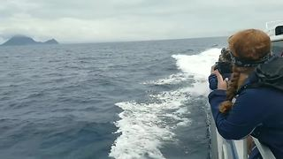 Hundreds of dolphins cruise alongside ship - Video