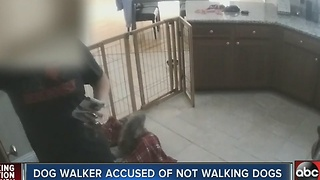 Family says dog walker didn't walk dogs - Video