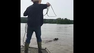 Cowboy ropes in cattle during deadly flood waters