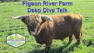 Deep Dive talk: what is A Greener World, Animal Welfare Approved Label all about part 1