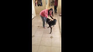 Dog ecstatic to be reunited with owner - Video