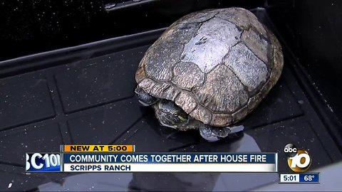 26 year old turtle among survivors of a house fire