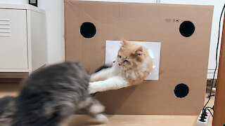 Just two cats wrestling inside a cardboard box