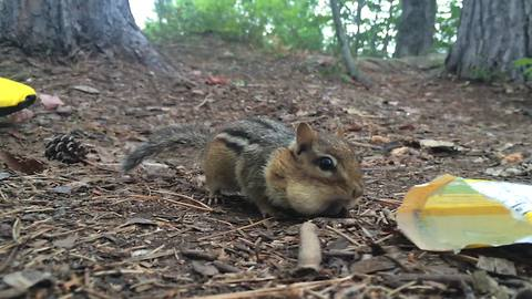 This Chipmunk Eat M&Ms Will Give You Energy