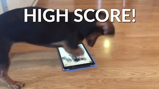 This Collection Of Dachshunds Ramps Up The Energy! - Video