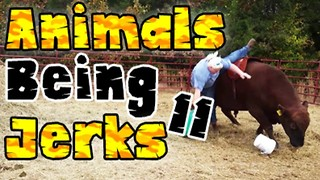 Animals Being Jerks #11 - Video