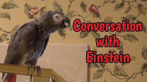 Chatty Parrot And His Owner Have An Entertaining Conversation