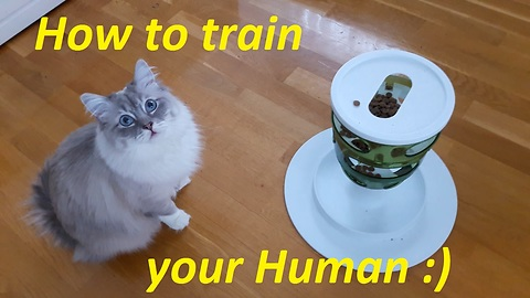How to train your human, cat's style