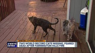 2 record-breaking cats missing following metro Detroit house fire - Video
