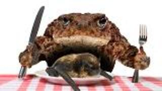 Rare Pic of Toad's Dinner - Video