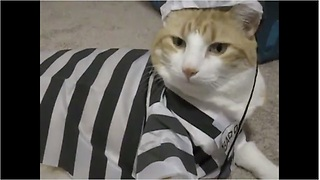 Feline Felon Models Prisoner Outfit  - Video