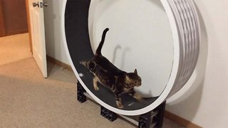 Hilarious Cats Work Out