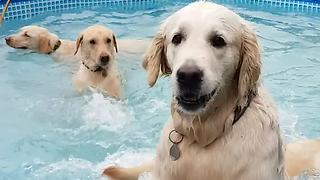 Happy dogs throw themselves a pool party