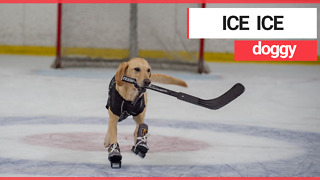 Meet the world's first ice-skating DOG