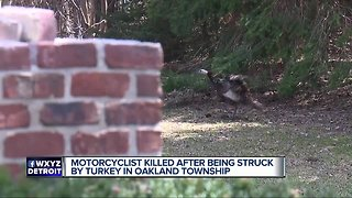 70-year-old motorcyclist killed after colliding with wild turkey
