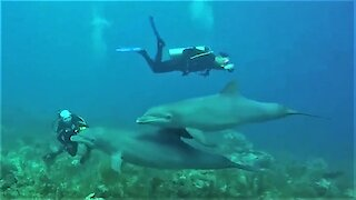 Playful dolphins swim among divers, giving them an unforgettable experience