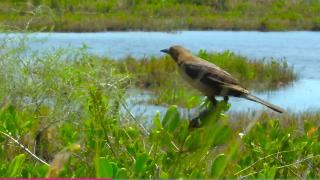 Visit Florida, Merritt Island Wildlife Refuge - Video