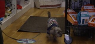 Vet offices seeing an influx of pet patients during pandemic
