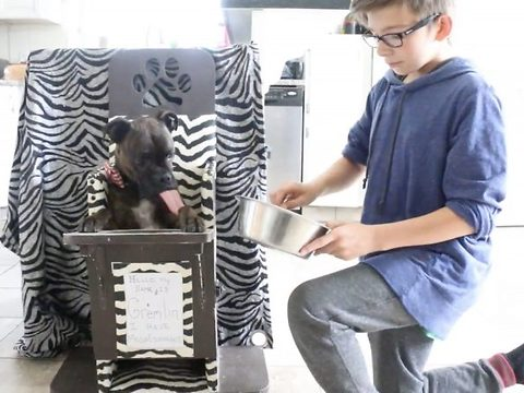 Doggie high chairs saving thousands of lives a year designed, created and shipped for free by husband and wife in garage