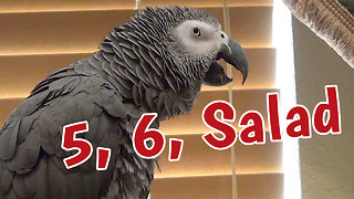 Talking parrot has very unique way of counting