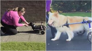 These dogs with disabilities live life to the max!