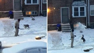 Dog tries to catch shovelled snow as cat looks on