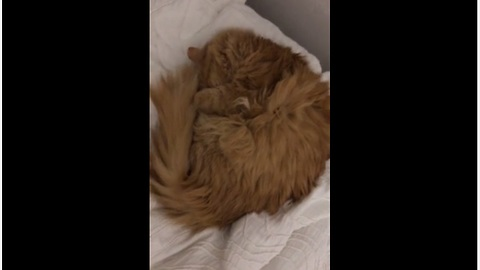 4 cats sleep on bed in exact same position