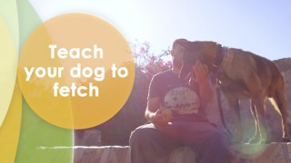 Train your dog to play with a ball - Video