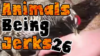 Animals Being Jerks #26 - Video
