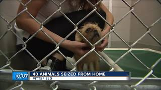Animals seized from northeast Wisconsin home