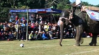 Elephant Soccer Match - Video