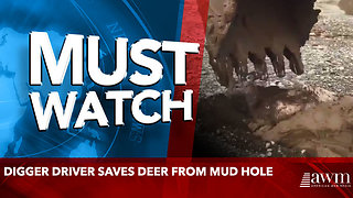 Digger driver saves deer from mud hole - Video