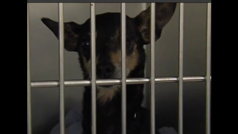 Palm Beach County Animal Care and Control makes public plea for adoptions