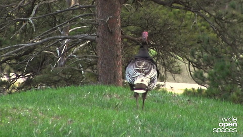 Mossy Oak Wyoming Turkey Hunt