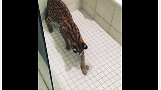 Unique kitty loves playing in the shower - Video