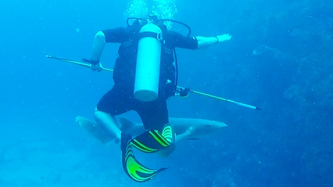 Diver startled by sudden appearance of curious shark