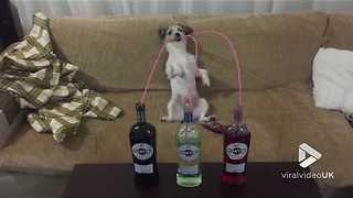 Dog has Martini party - Video