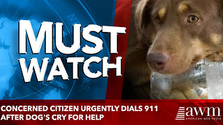Concerned Citizen Urgently Dials 911 After Dog's Cry For Help - Video