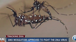GMO mosquitoes approved to fight the Zika virus - Video