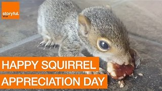 The Slickest Selection of Sensational Squirrels - Video