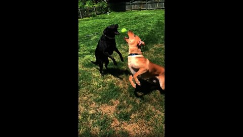 The most epic fetch fail caught on camera!
