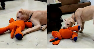Adorable Dog Playing With Comfort Dog