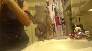 Diva monkey demands to be pampered - Video